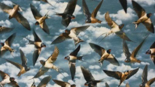 vogels in de lucht digitale tricot