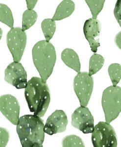 cactus about blue botanical garden 3